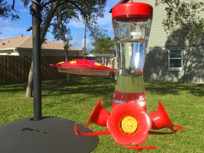 Step By Guide To Clean A Hummingbird Feeder