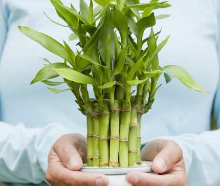 How To Use Feng Shui For Wealth And Good Luck