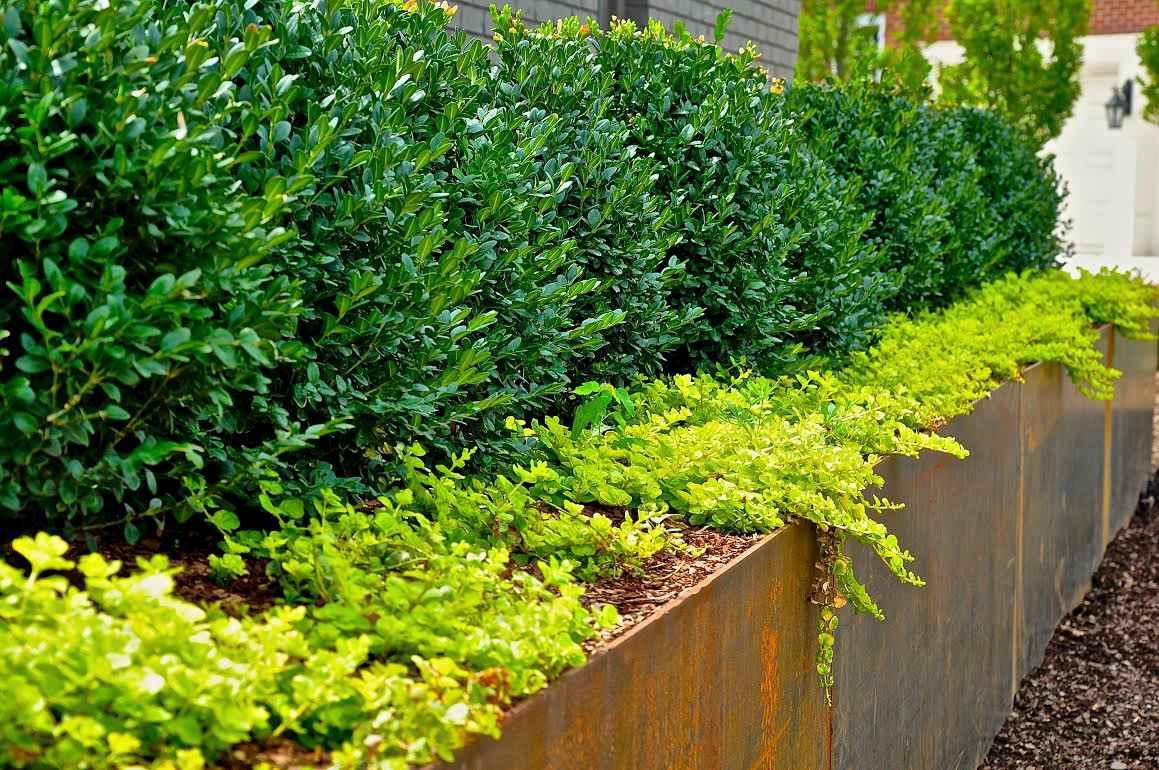 jardineras con arbustos y jenny rastrera