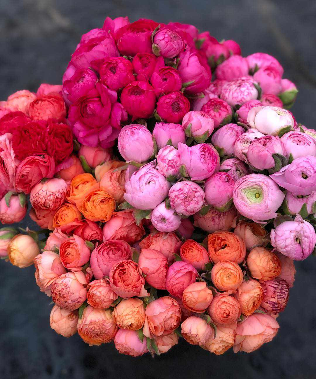 Pink, red, and orange flowers