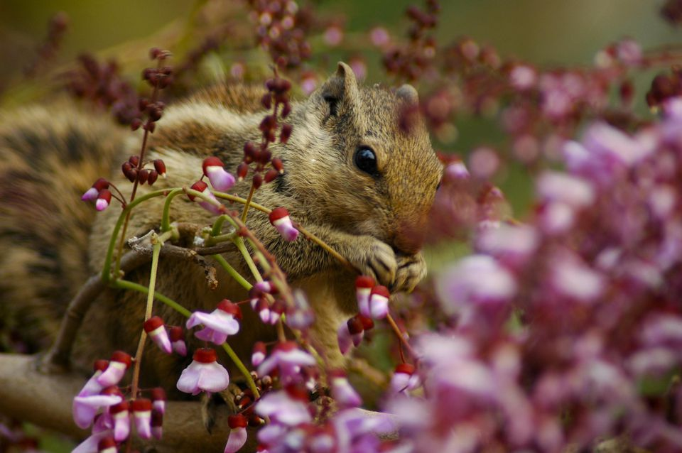 Squirrel enjoying the Springtime