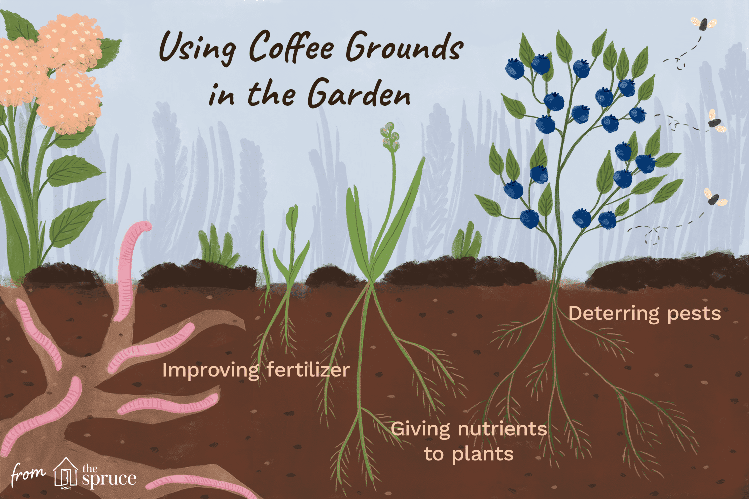 Coffee In Compost