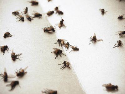 How To Control Flies Indoors