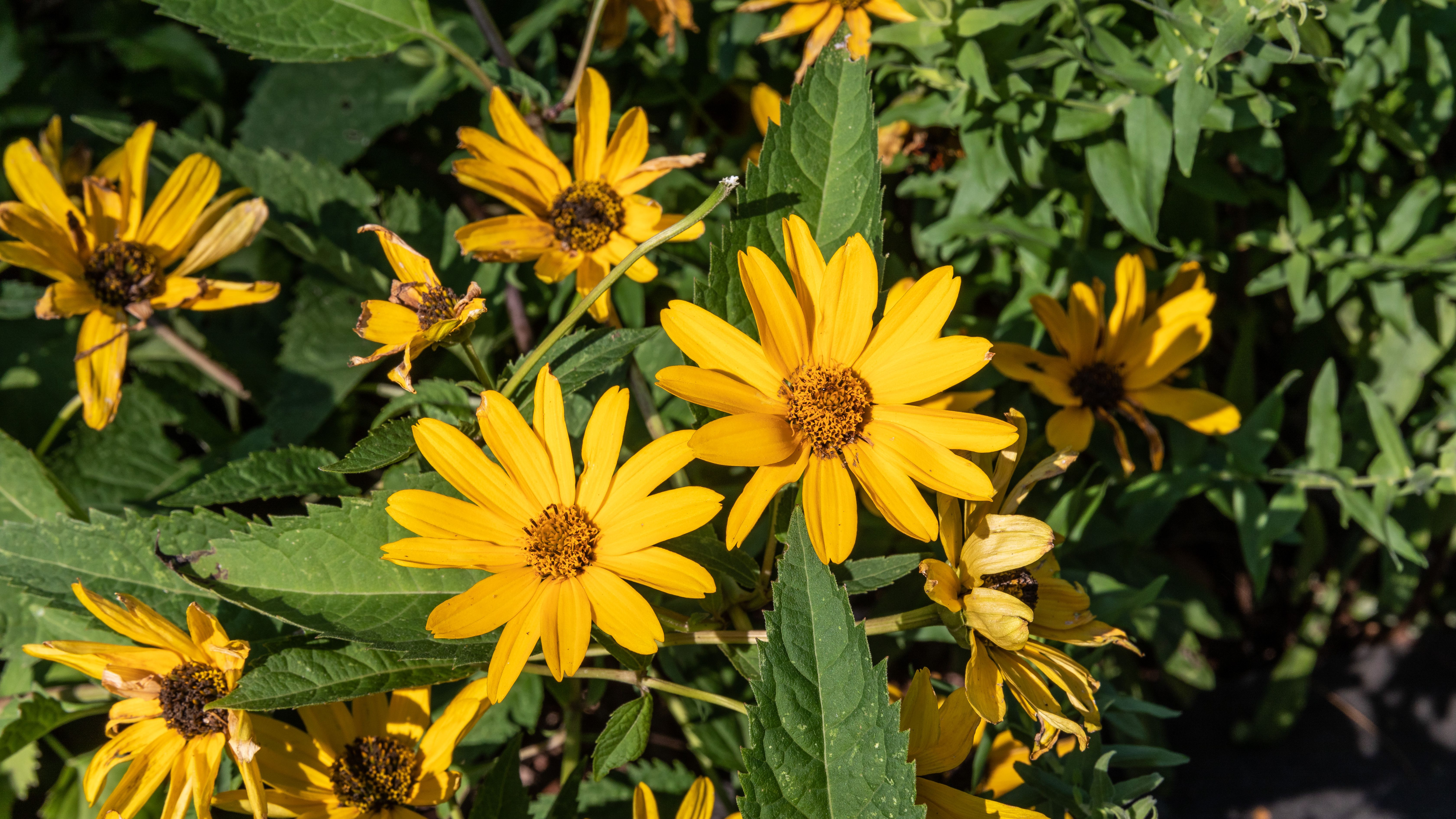 13 Recommmended Plants With Daisy Like Flowers