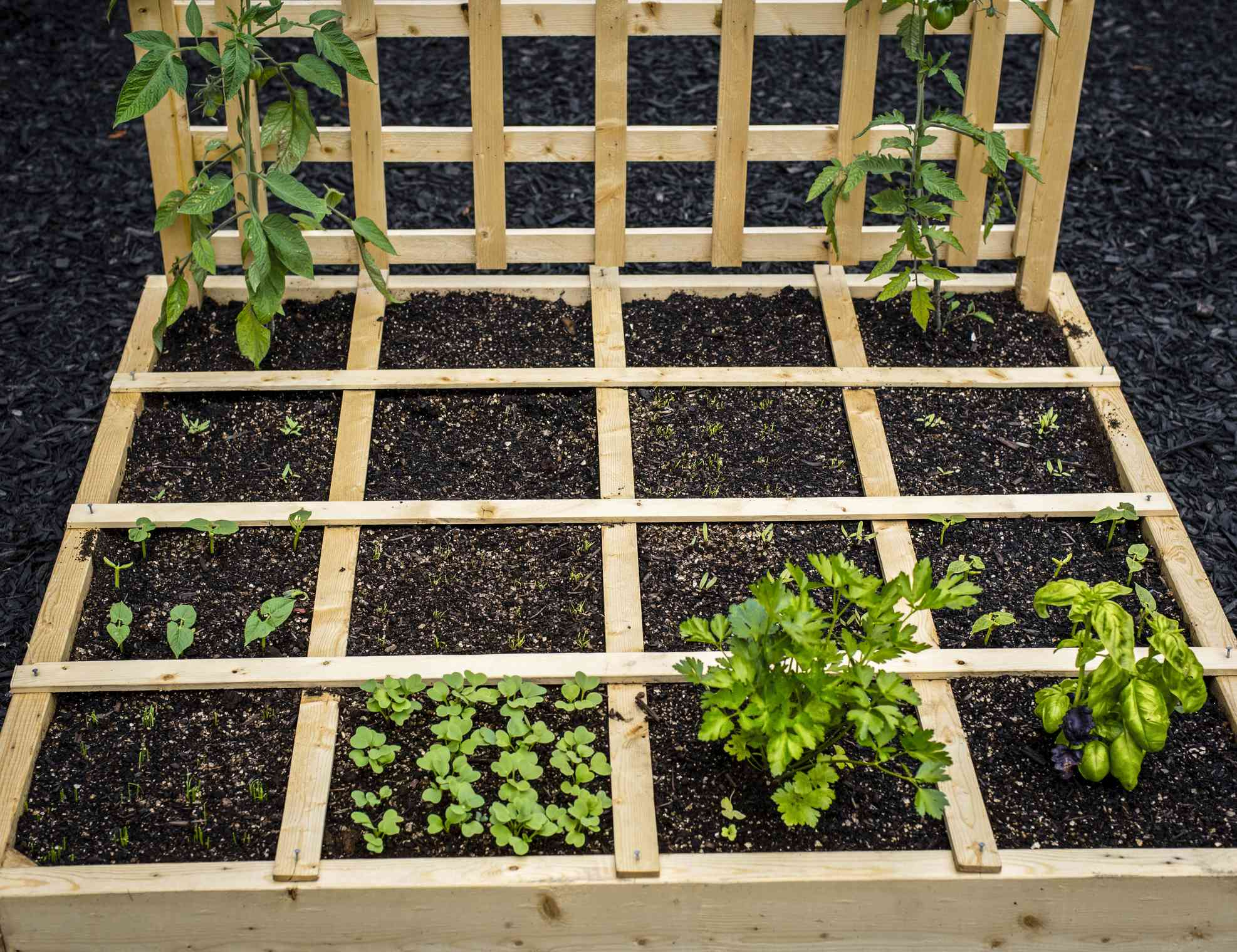 Square foot gardening maximizes small spaces