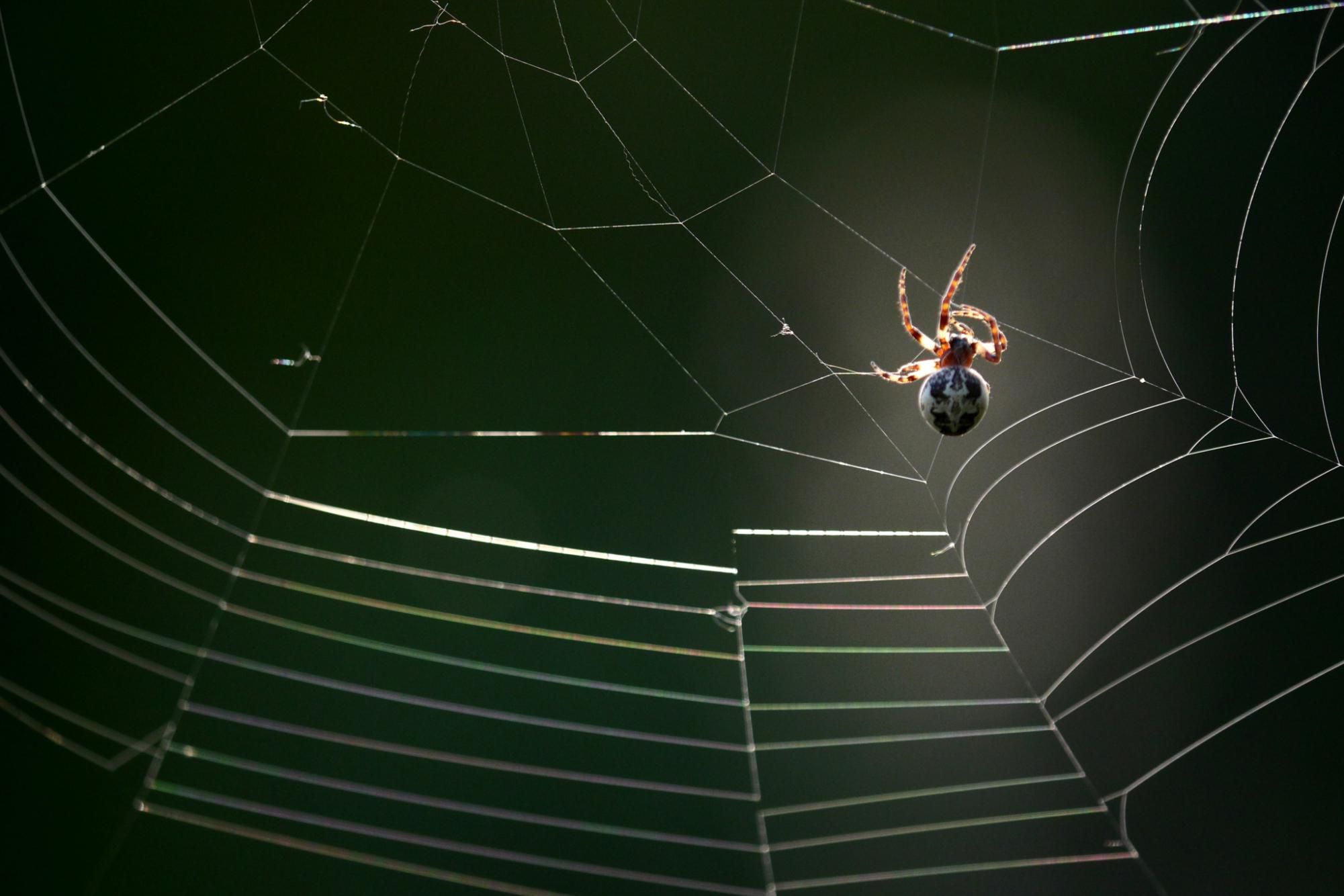 Why Spiders Build Webs And Other Facts About Webs