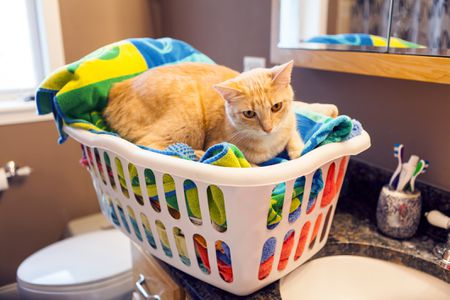 Dryer Sheets Are Toxic to Dogs and Cats