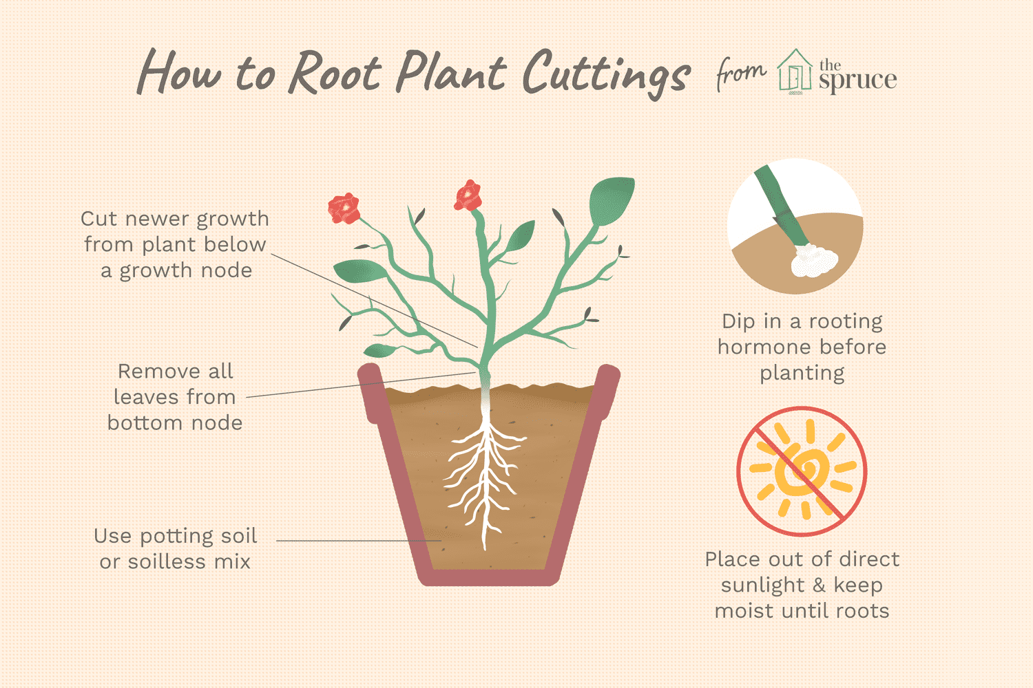 How to Propagate Plants by Rooting Stem Cuttings
