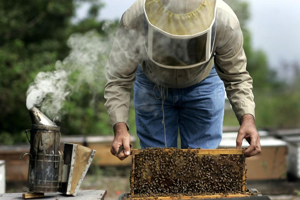 Buying Honey Bees and Apiary Supplies For Your Hives - photo#15