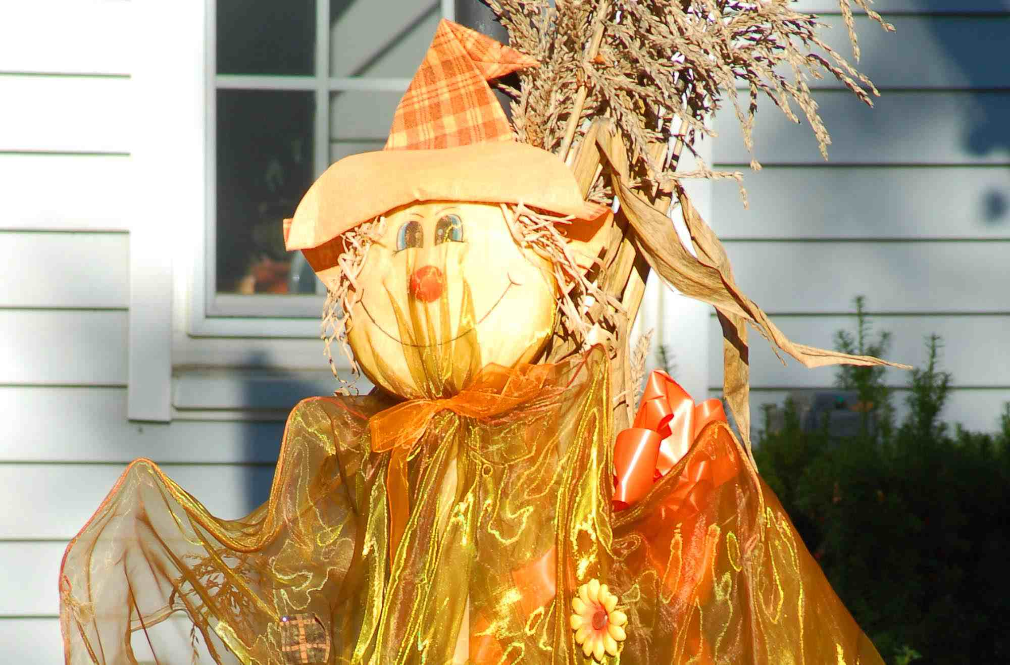 Scarecrow supported by cornstalks