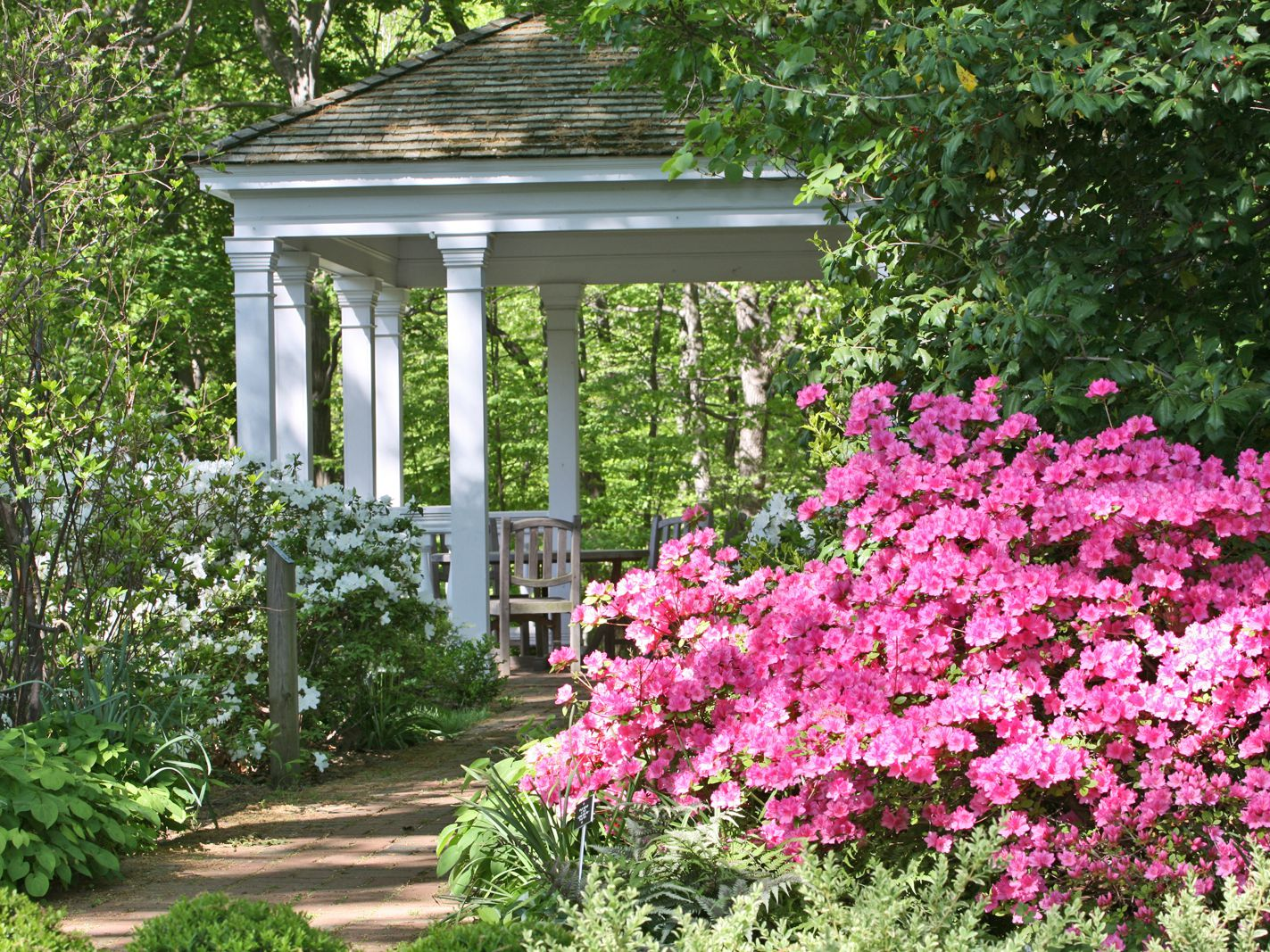25 10 Best Native Plants for Southern Gardens