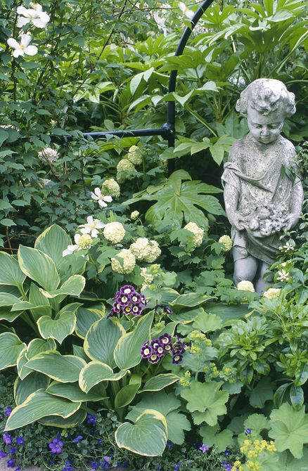 Primroses and viburnum