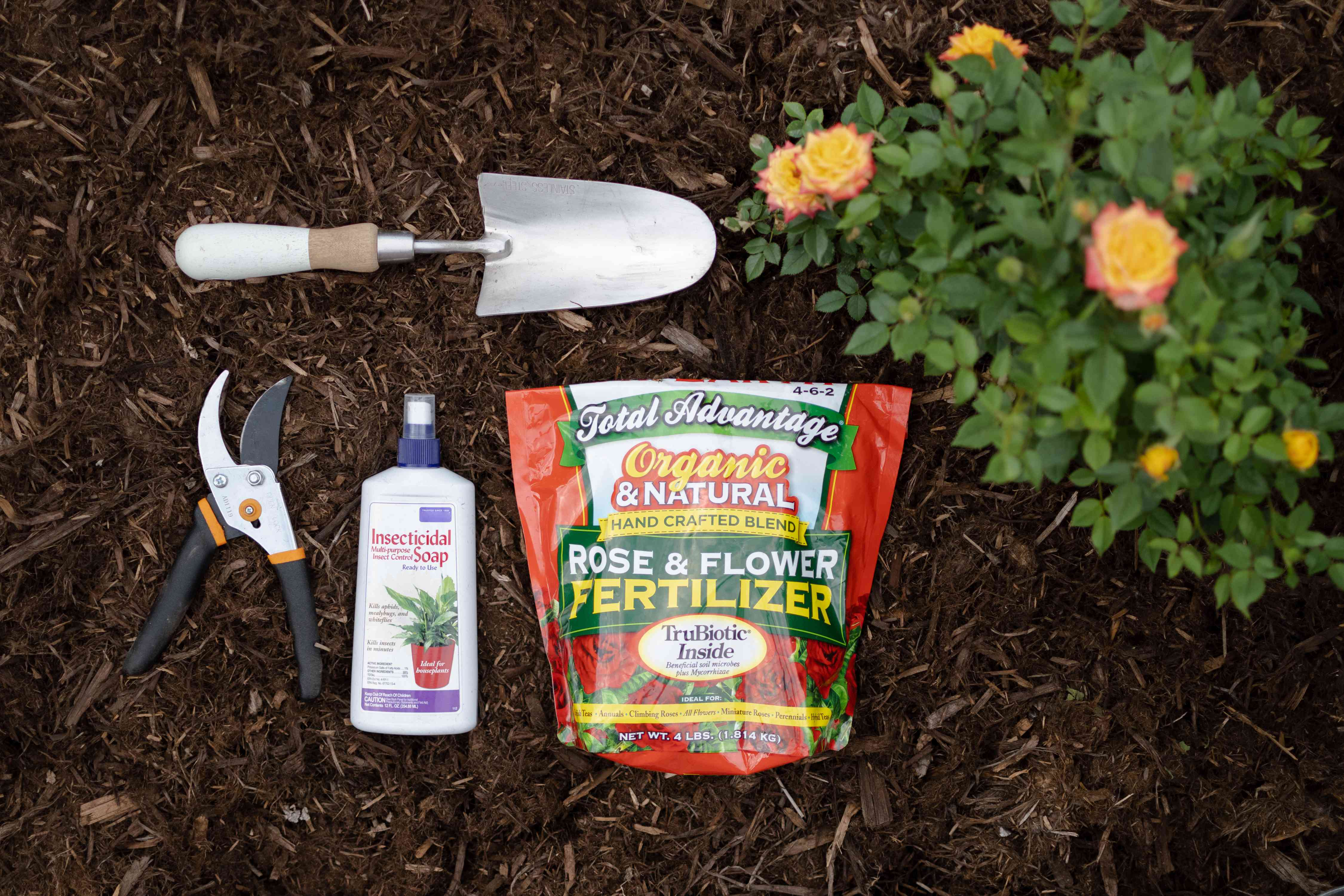 Materials and tools to get more blooms from roses