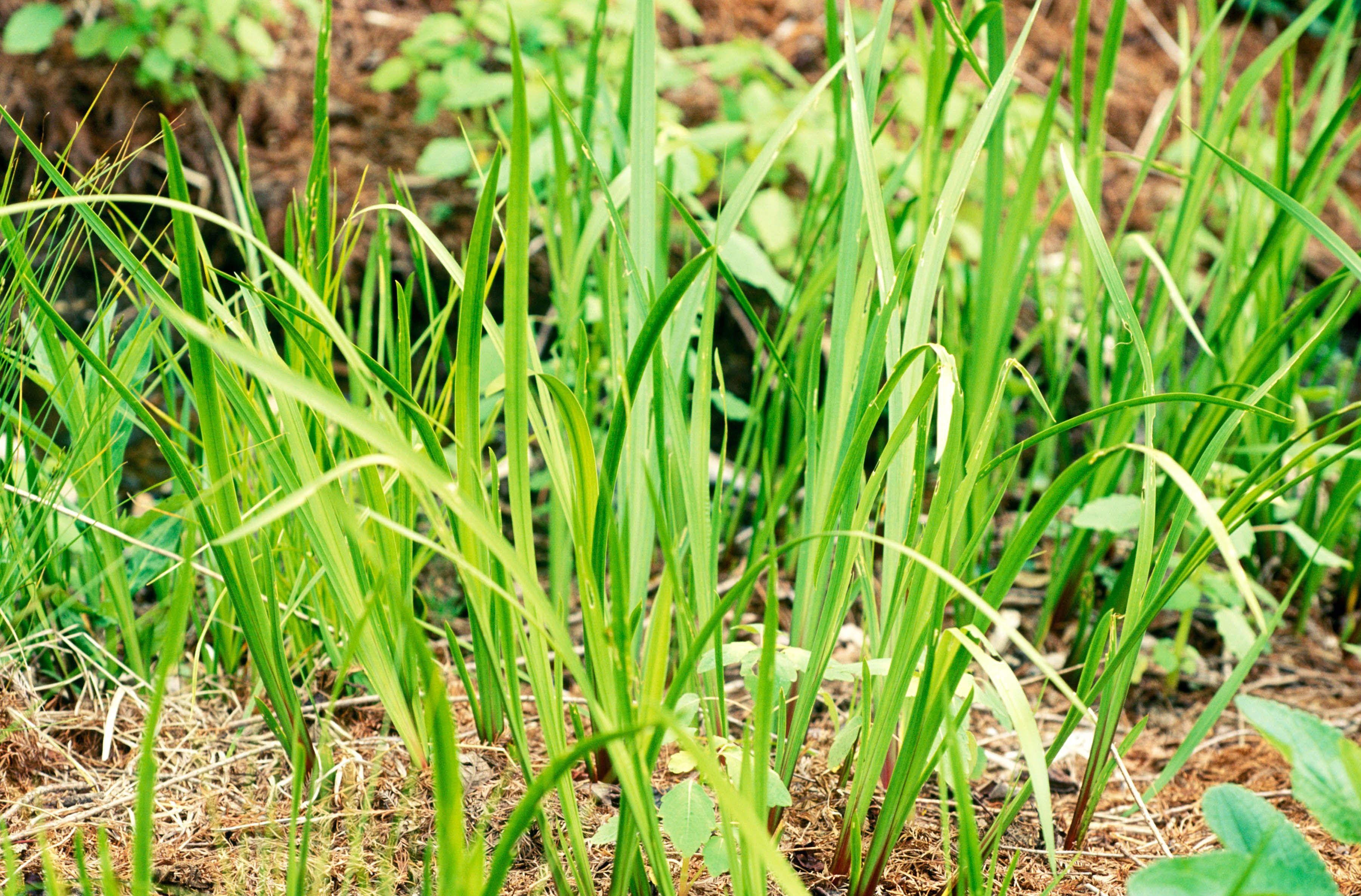 10 Best Ornamental Grasses For Winter Gardens