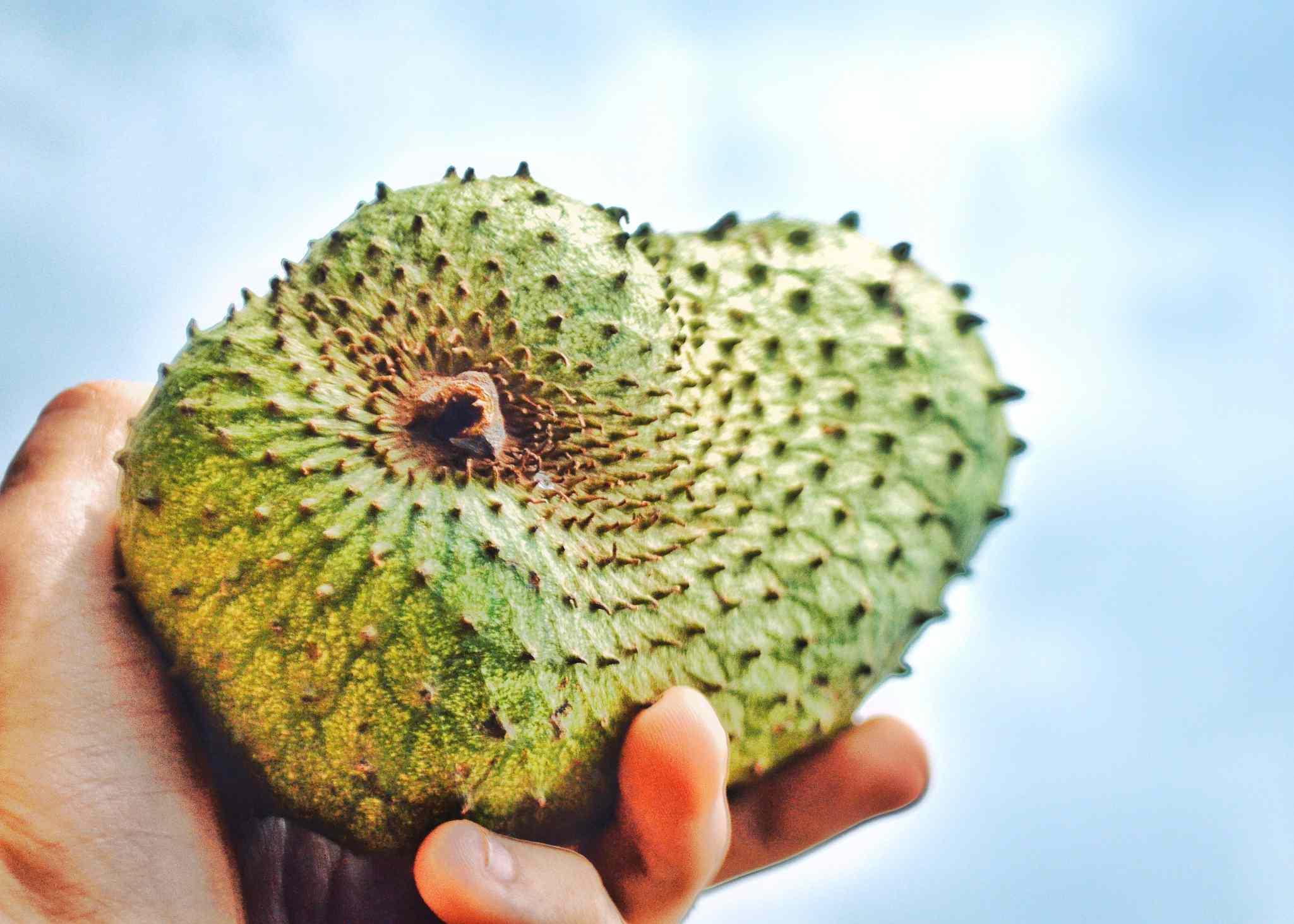hand holding soursop fruit
