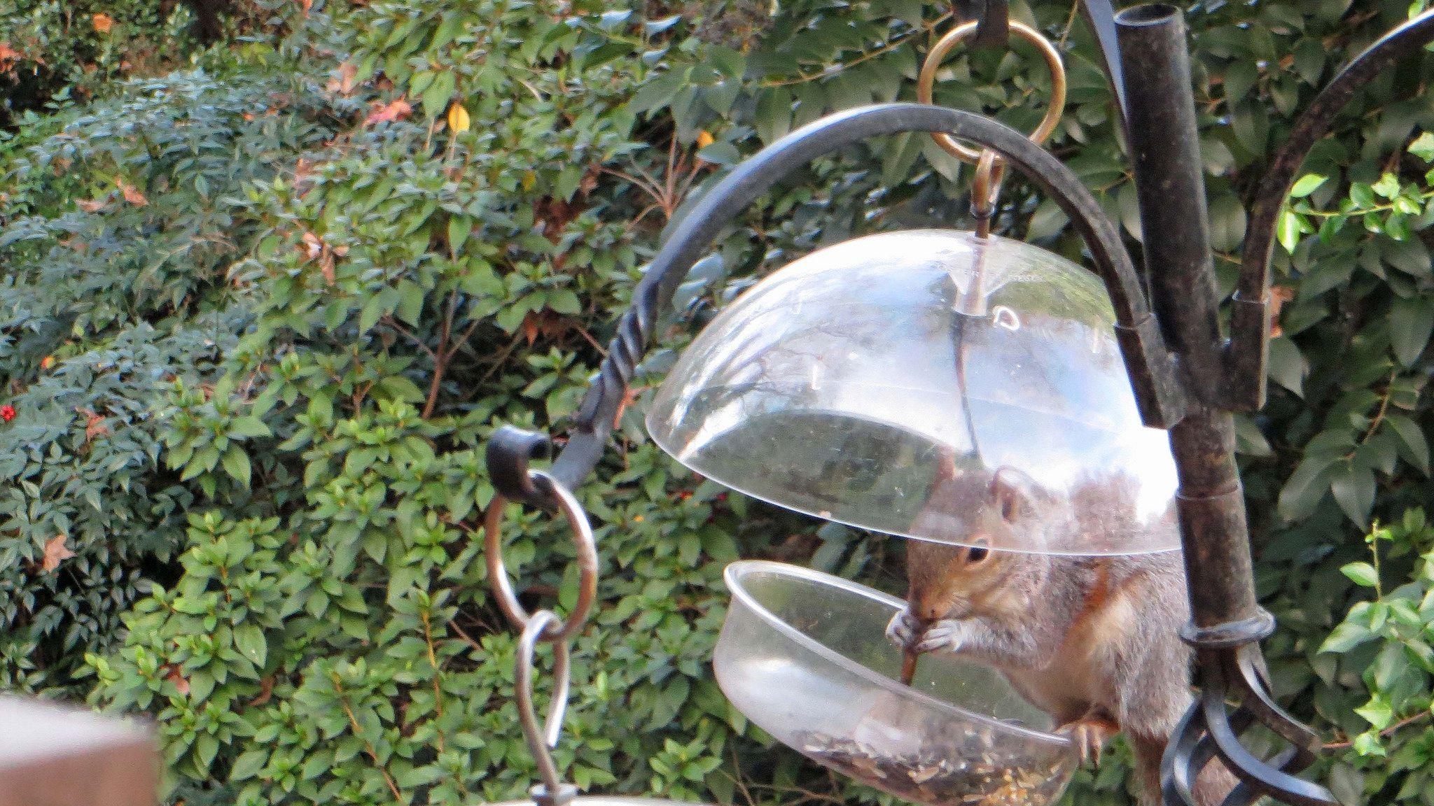 best 25 brd cage decoraton deas on pnterest.htm 4 different ways to control squirrels around your home  4 different ways to control squirrels