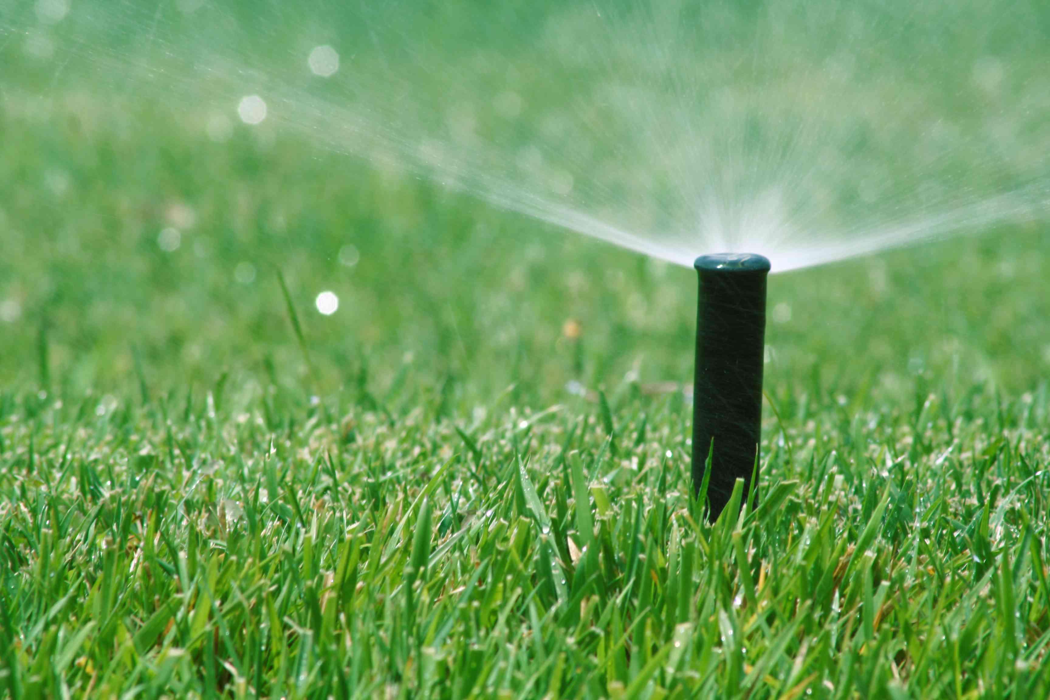 Sod needs more watering than hydroseeding