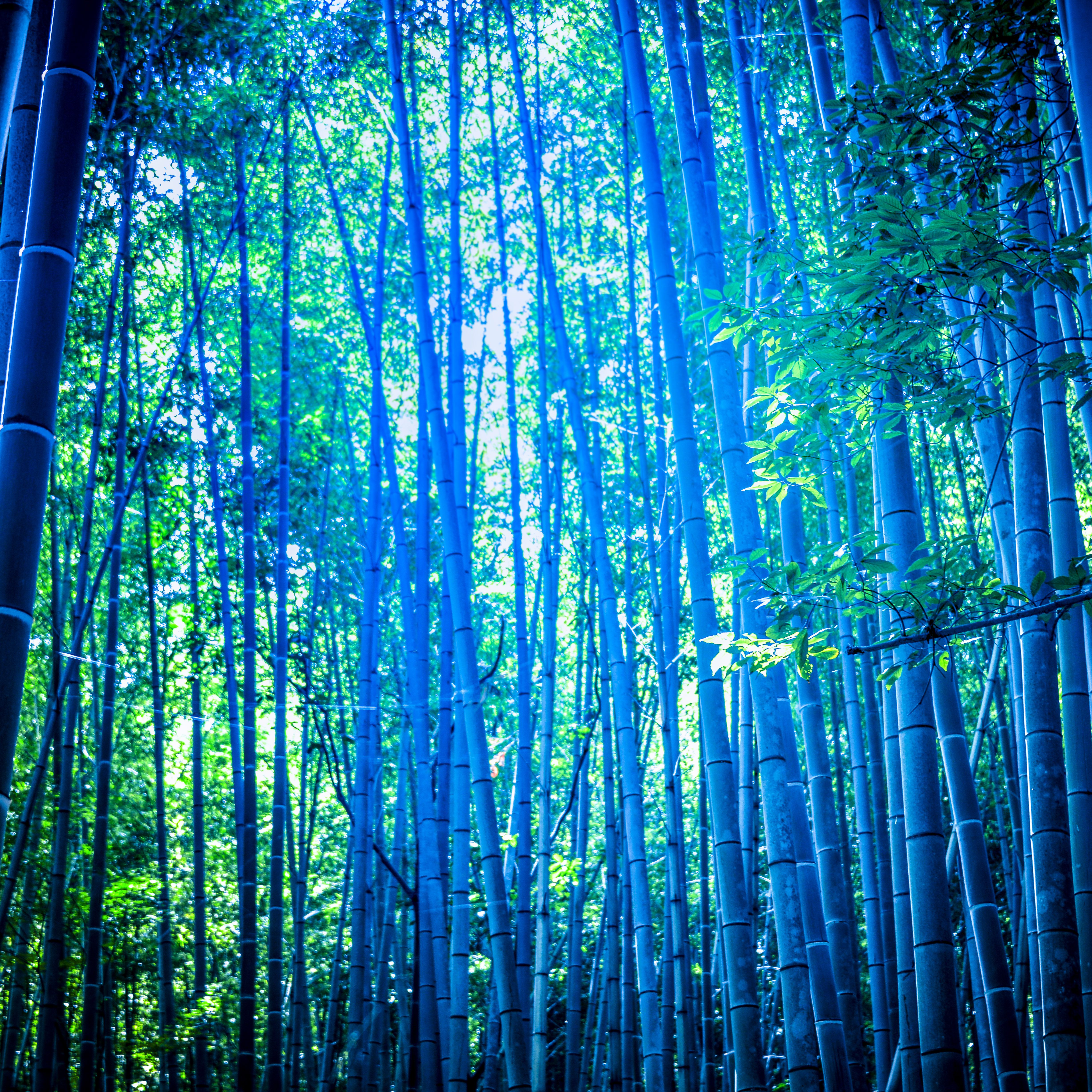 What Are The Best Growing Conditions For Bamboo