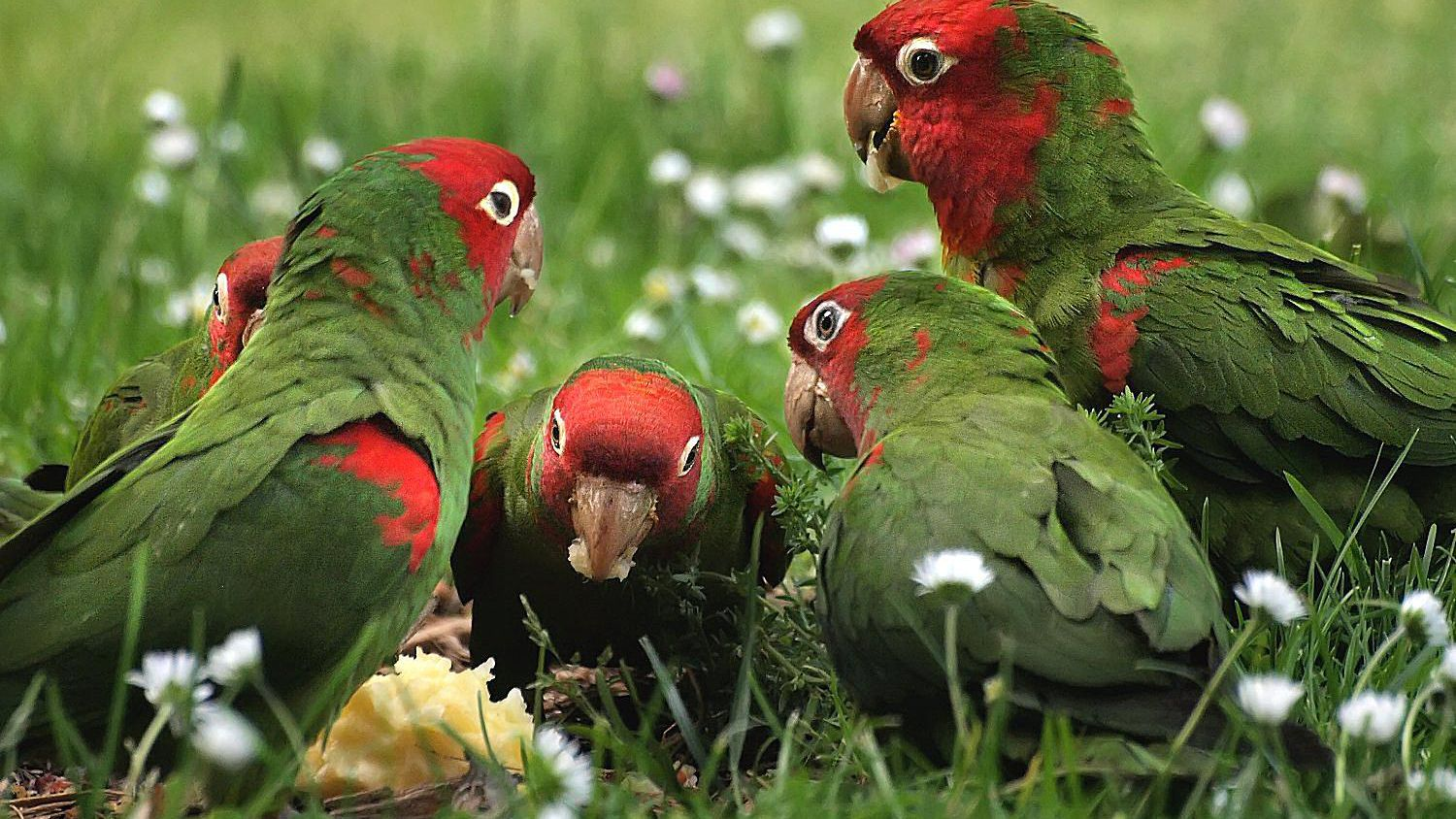 How To Attract Parrots To Your Yard