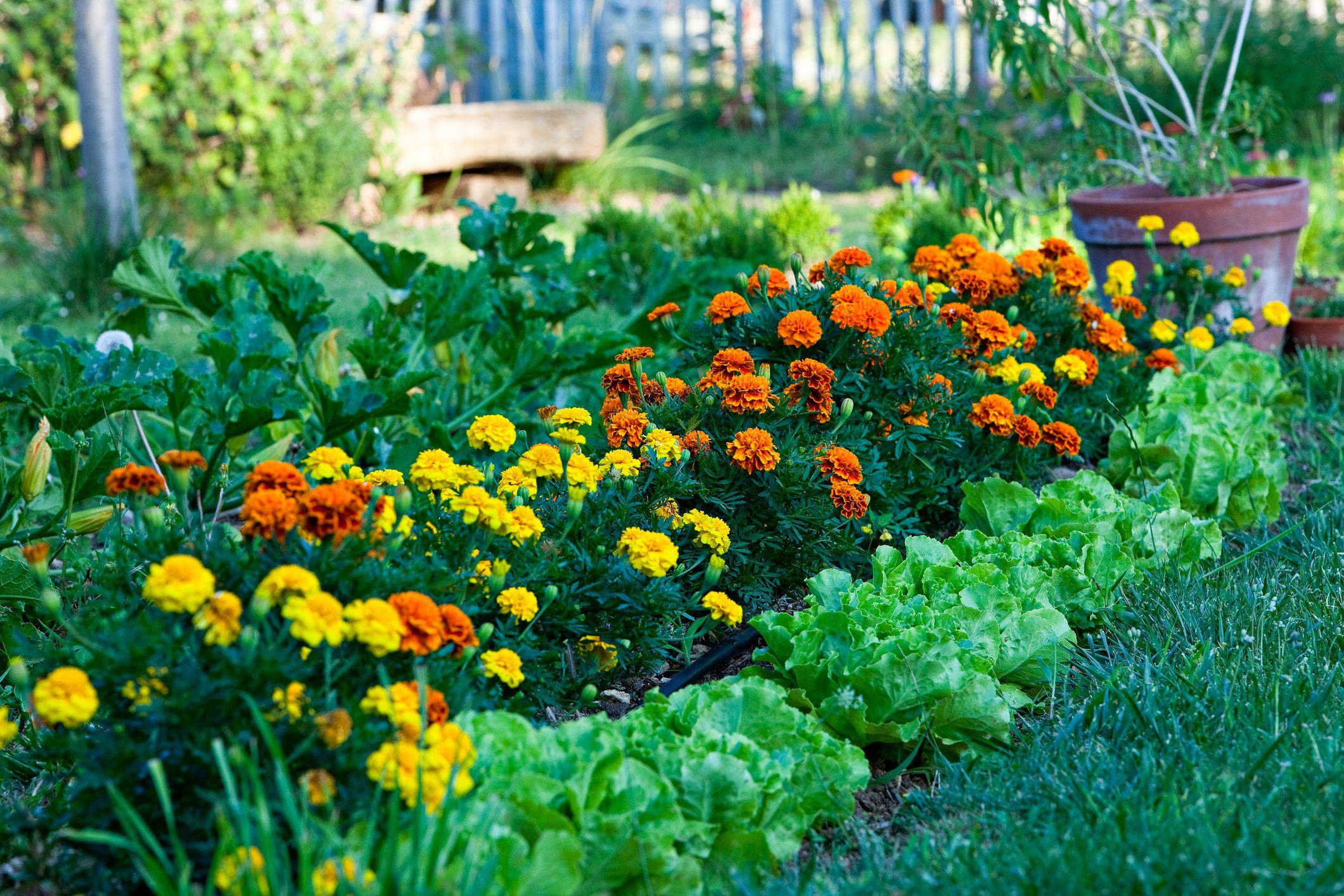 Organic gardening - cover