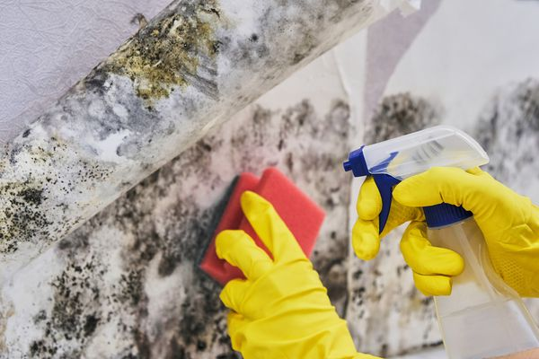 Treating Mold in Basement