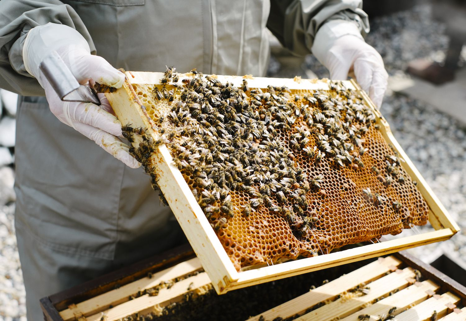 A Beginner S Guide To Beekeeping