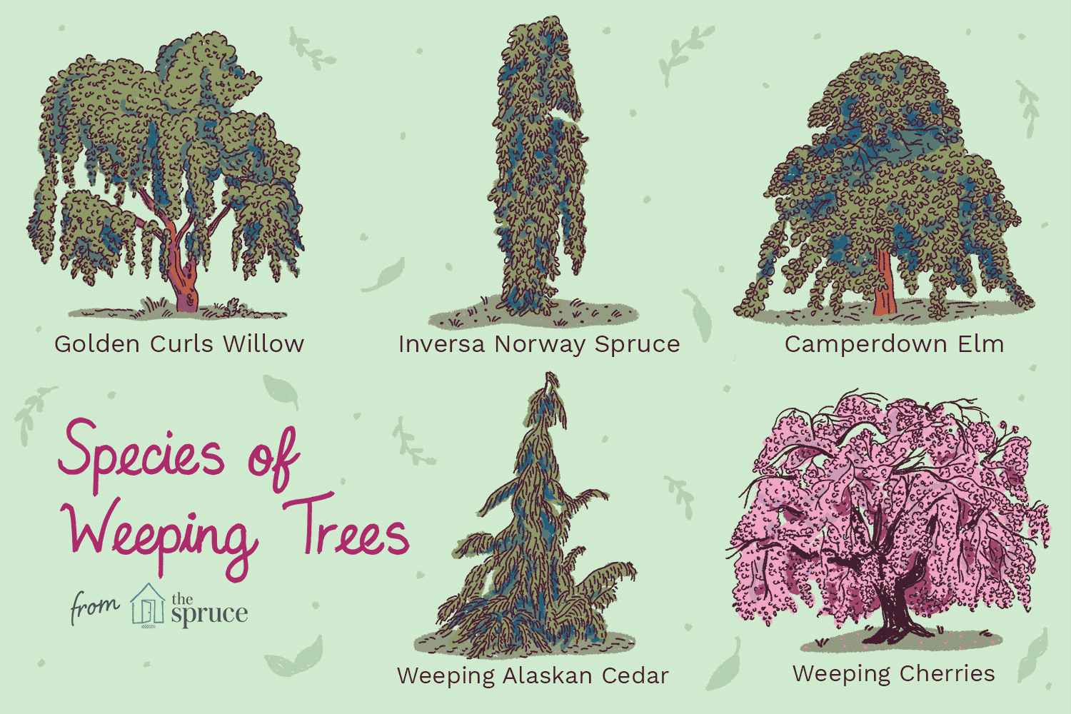 illustration of weeping trees
