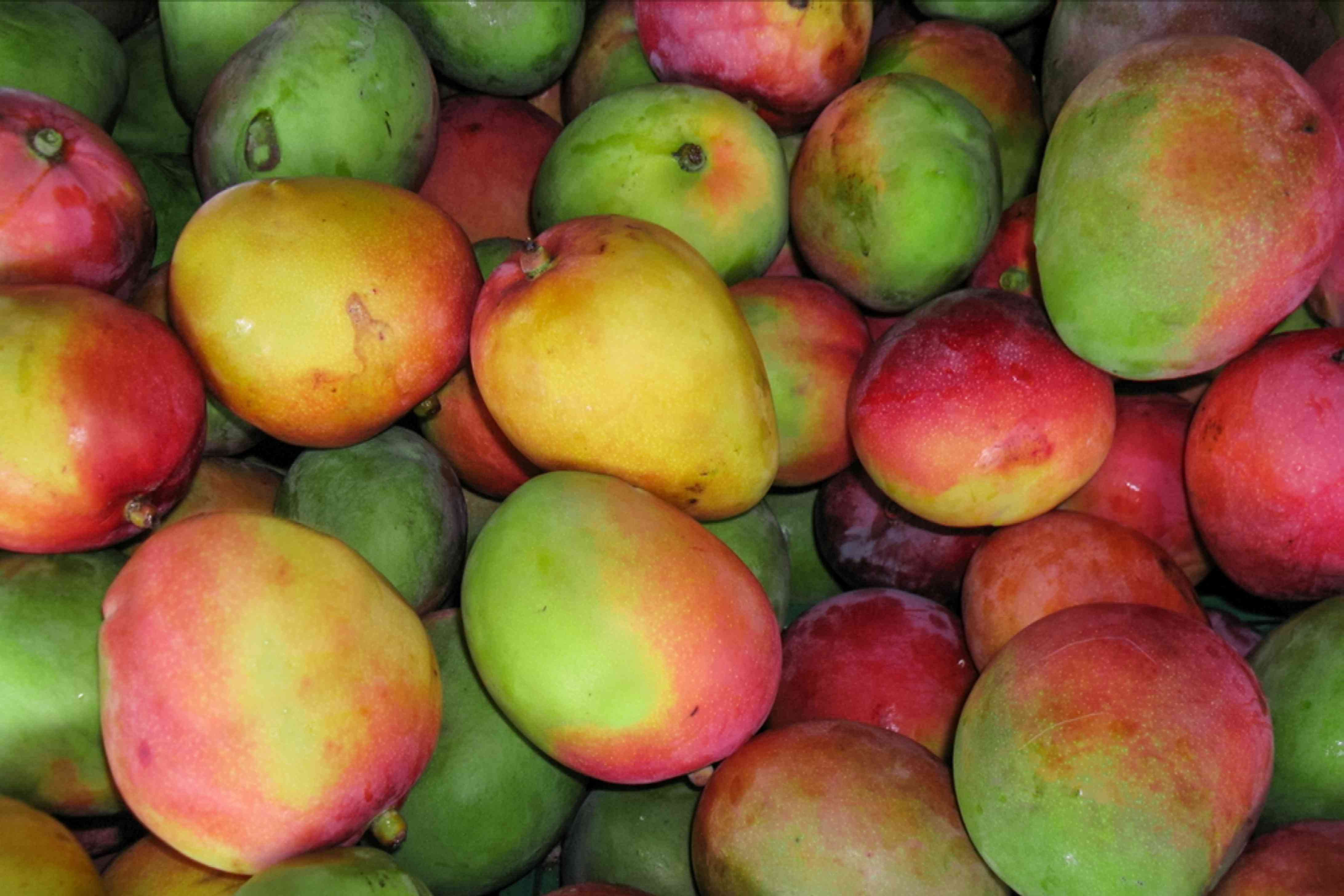 Red, yellow and red mangoes piled on each other