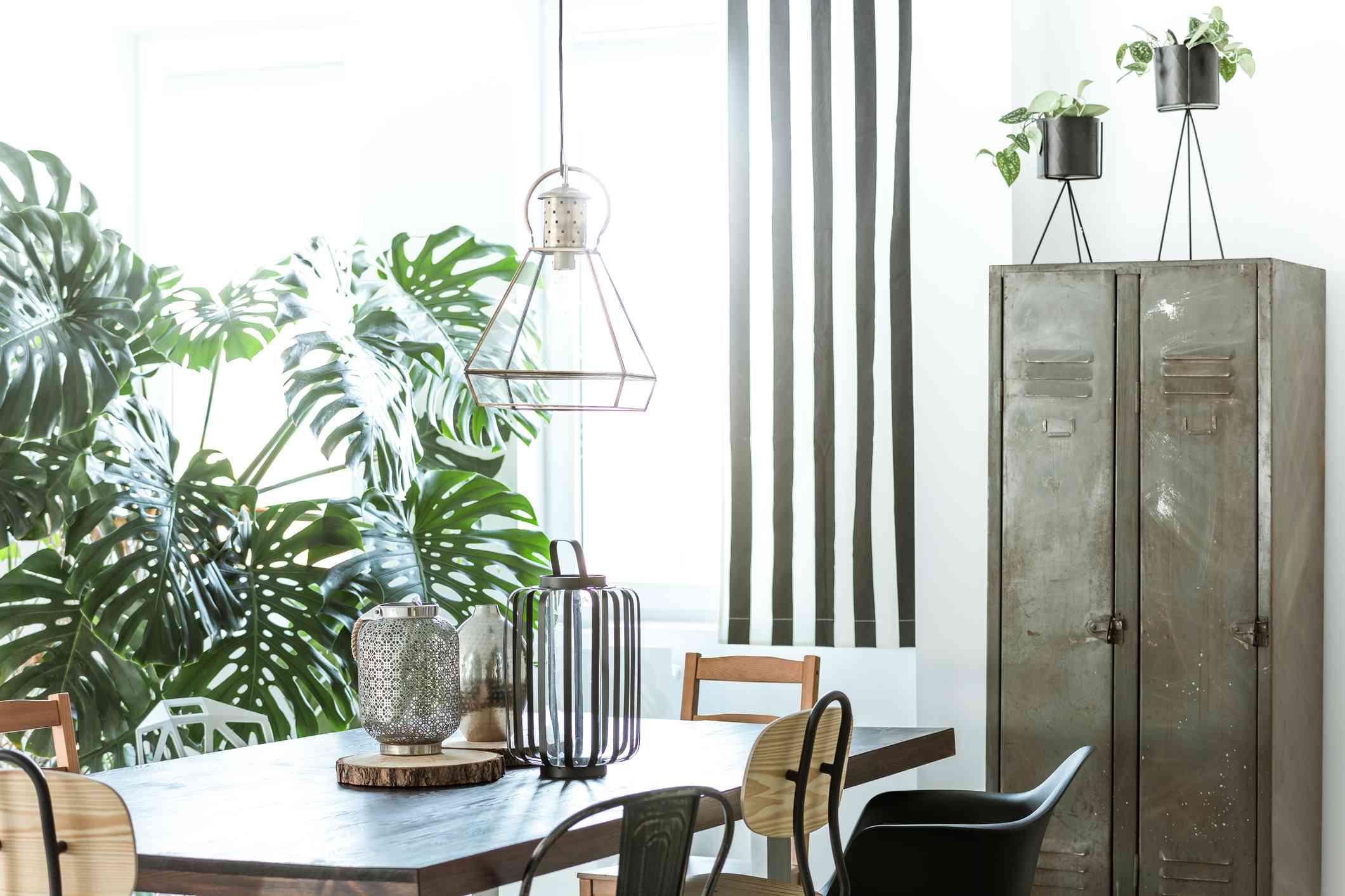 Plants in a garage.