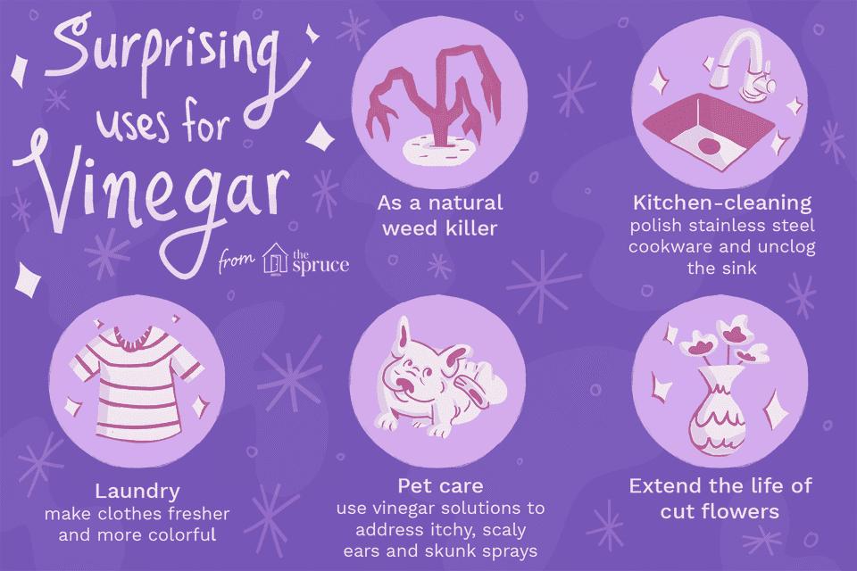surprising uses for vinegar illustration