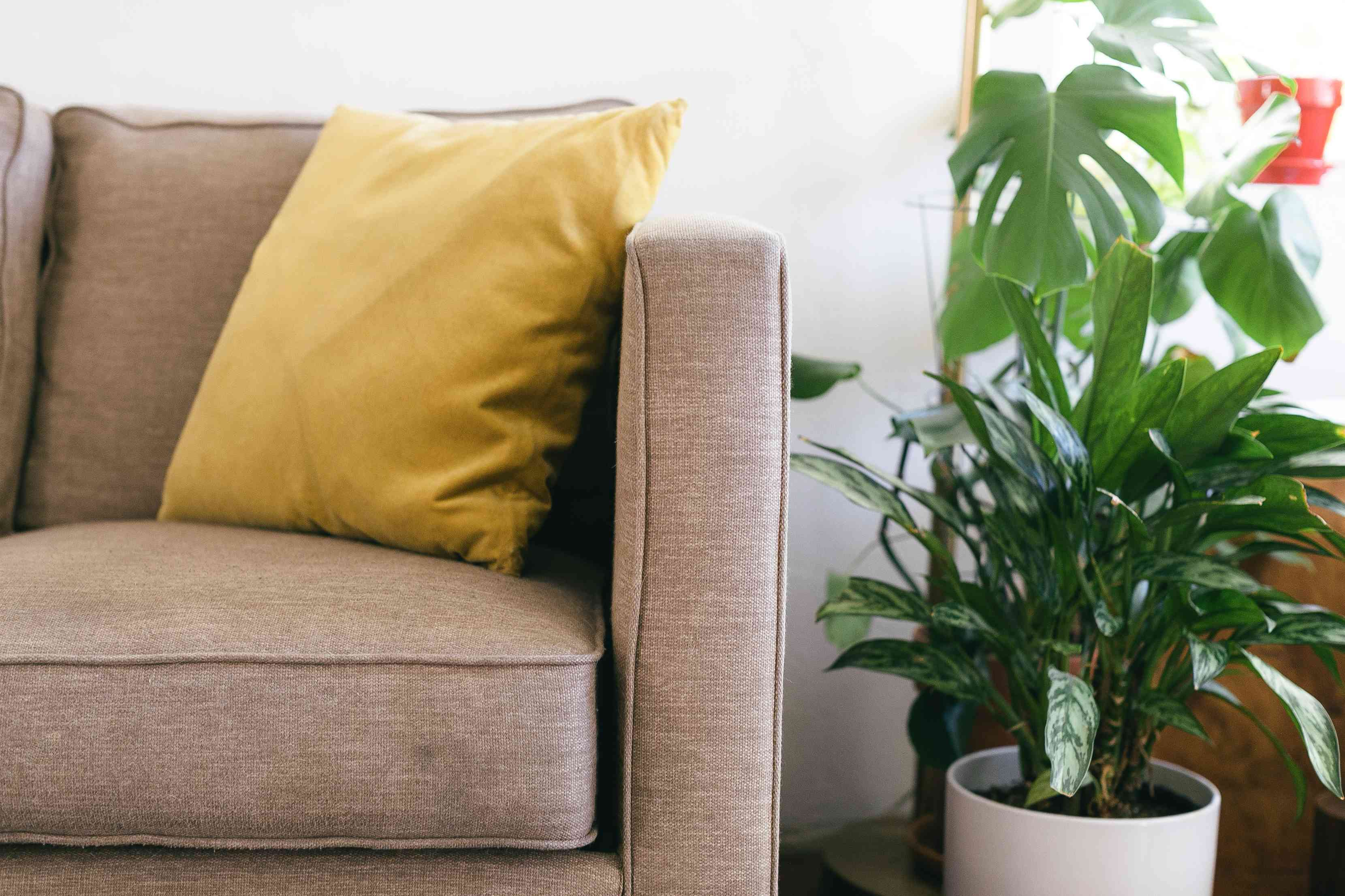 Tan couch corner with yellow cushion and houseplant in white pot closeup