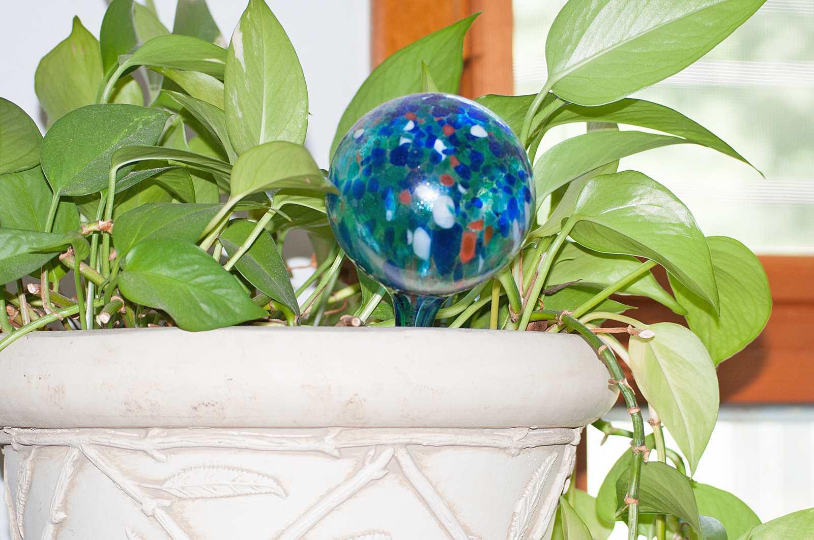 Watering Globe