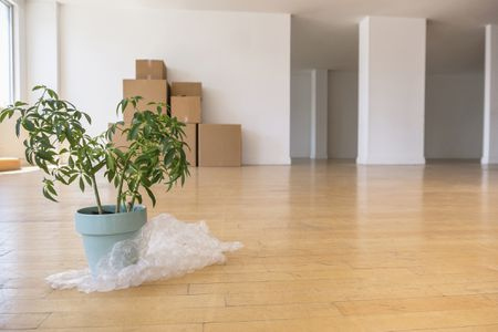How to Move Household and Garden Plants
