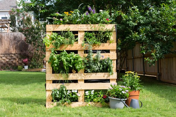 Planter made of pallet boxes mixed with different greens and flowers in backyard