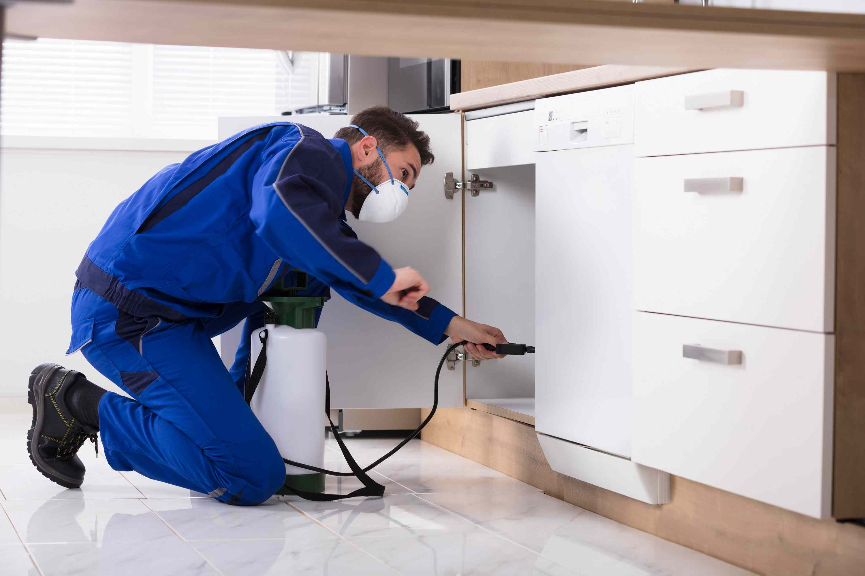 Spring Cleaning Pest Control