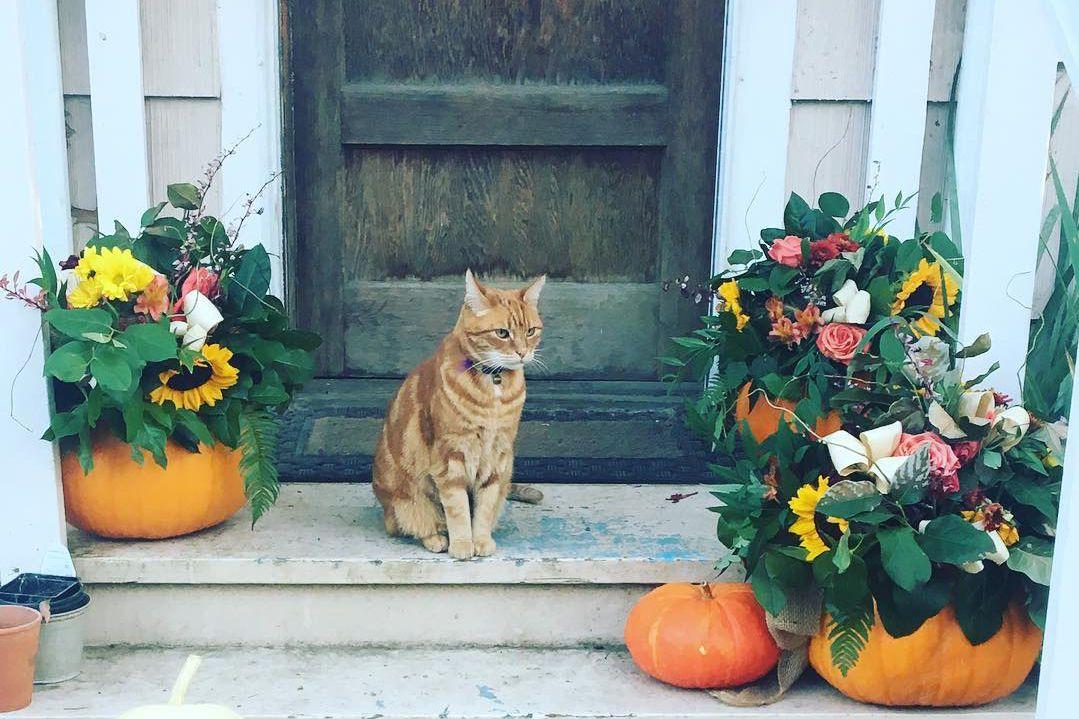 Porche de otoño de jarrones de calabaza