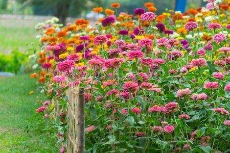 Fresh Pink Flowers Blooming In Field