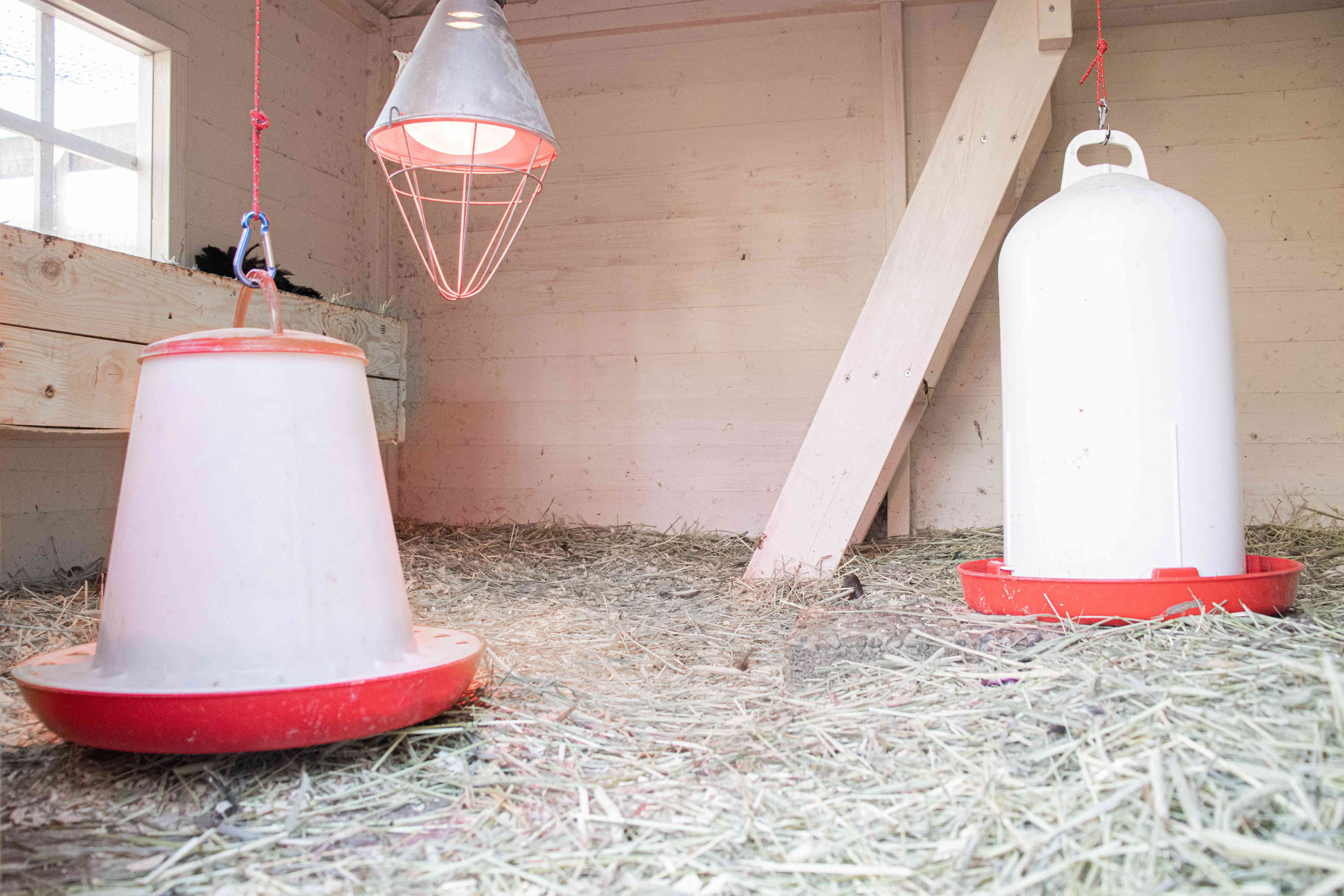 Chicken feeders hanging inside coop with warming light in middle