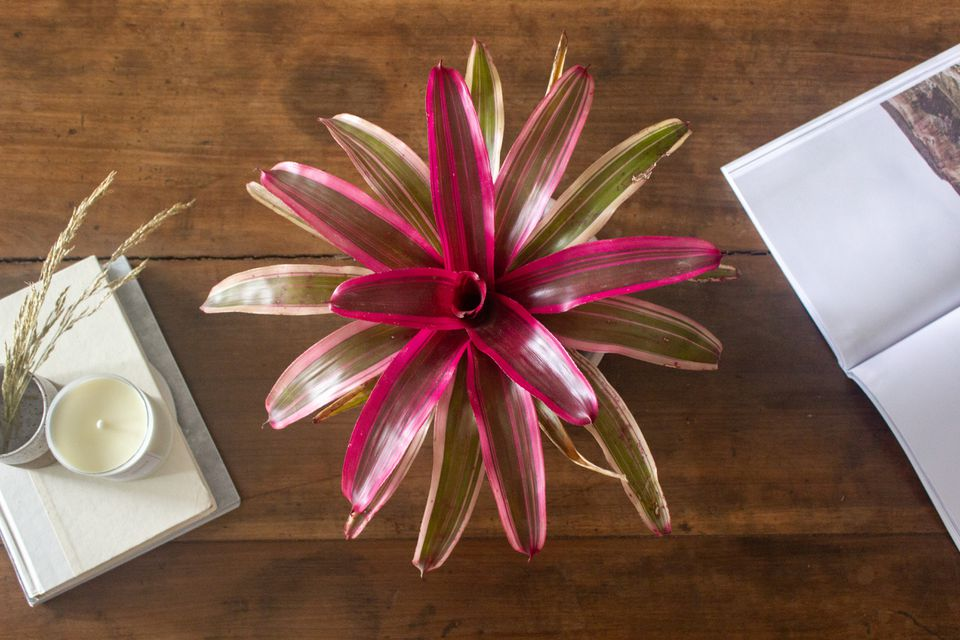 bromeliad from overhead