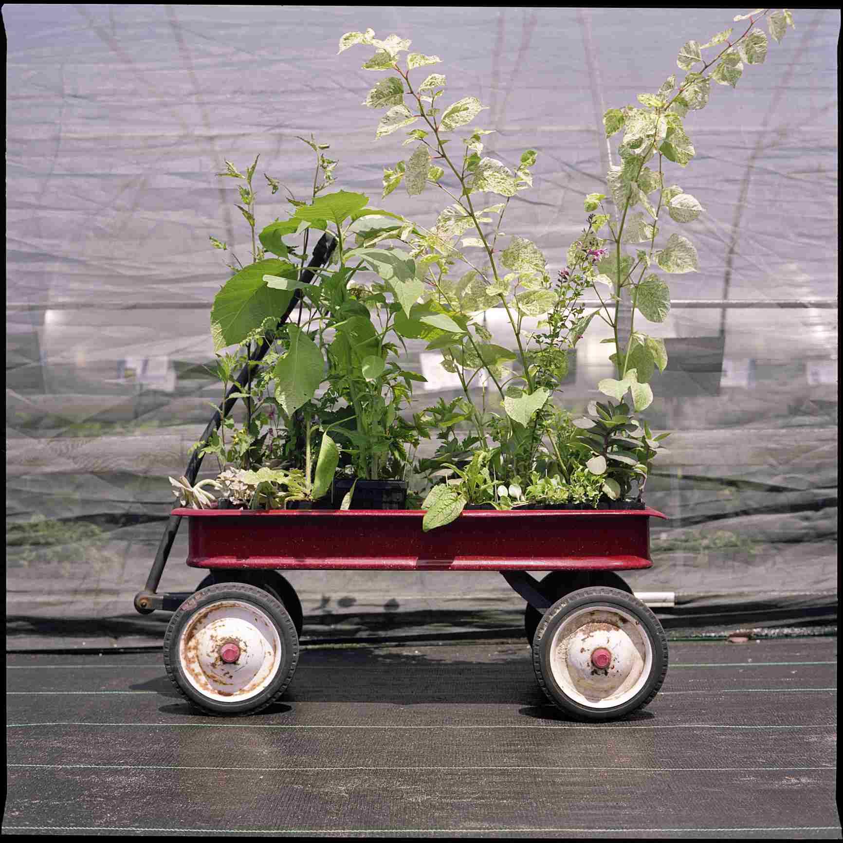 Carro rojo lleno de plantas