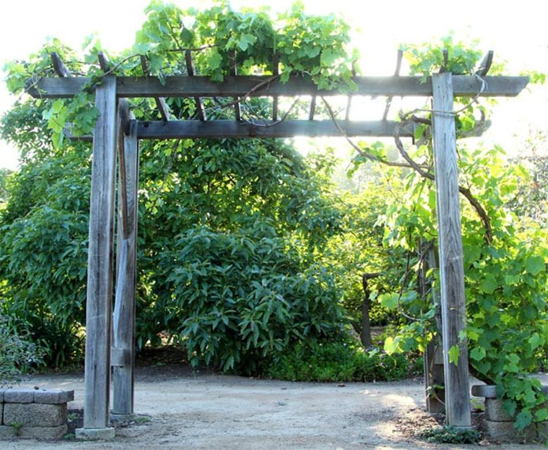 A grape arbor among green trees