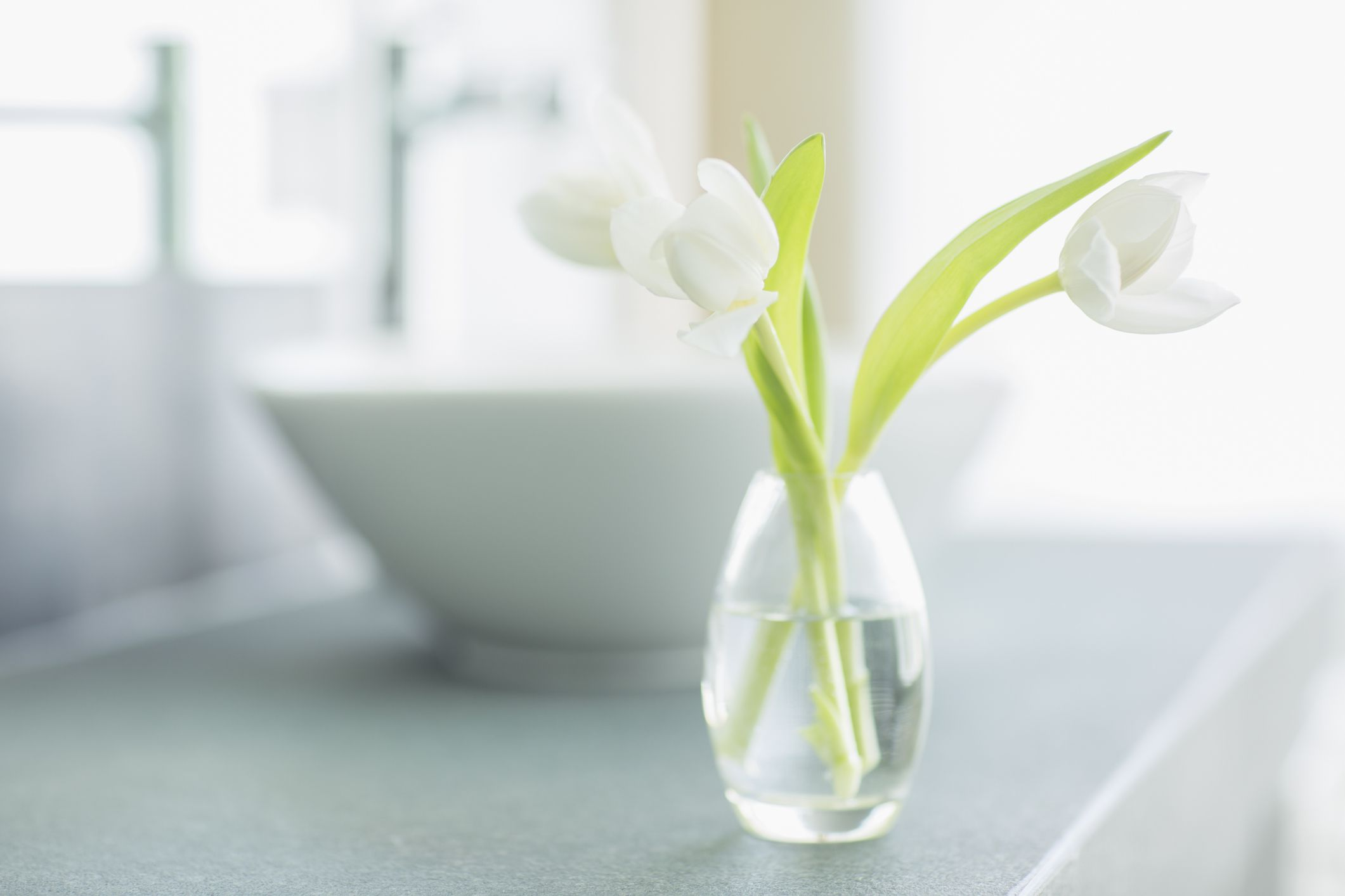 white tulips in a bud vase in the bathroom