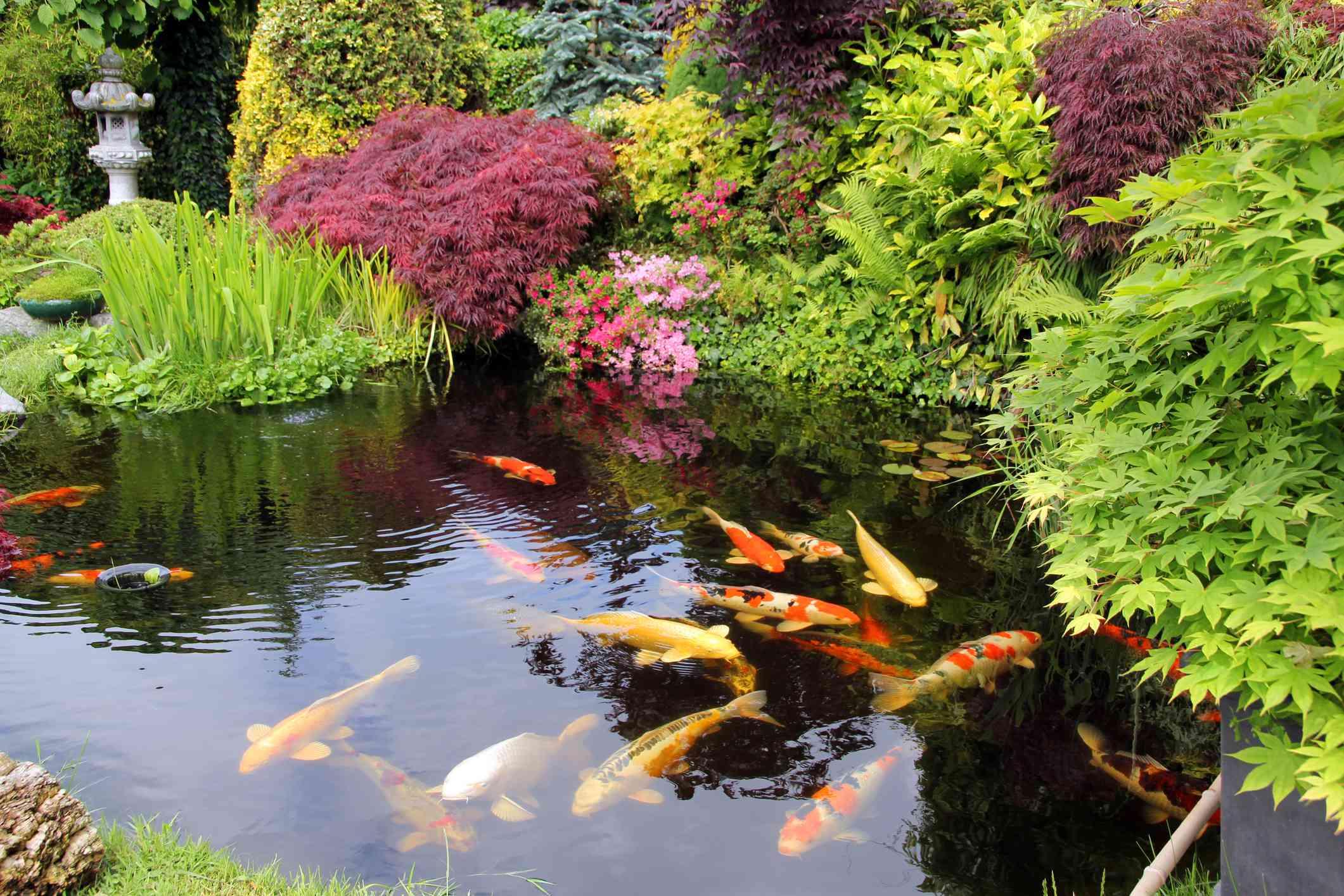 24 Stunning Koi Pond Design Ideas