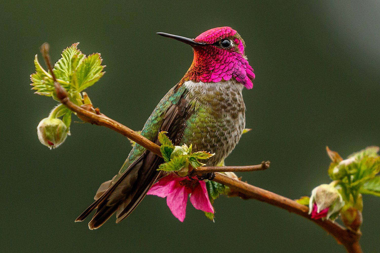 Easy And Safe Perches For Hummingbirds