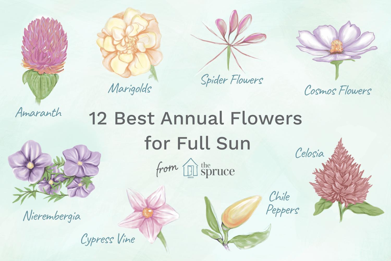 12 Best Annual Flowers For Full Sun