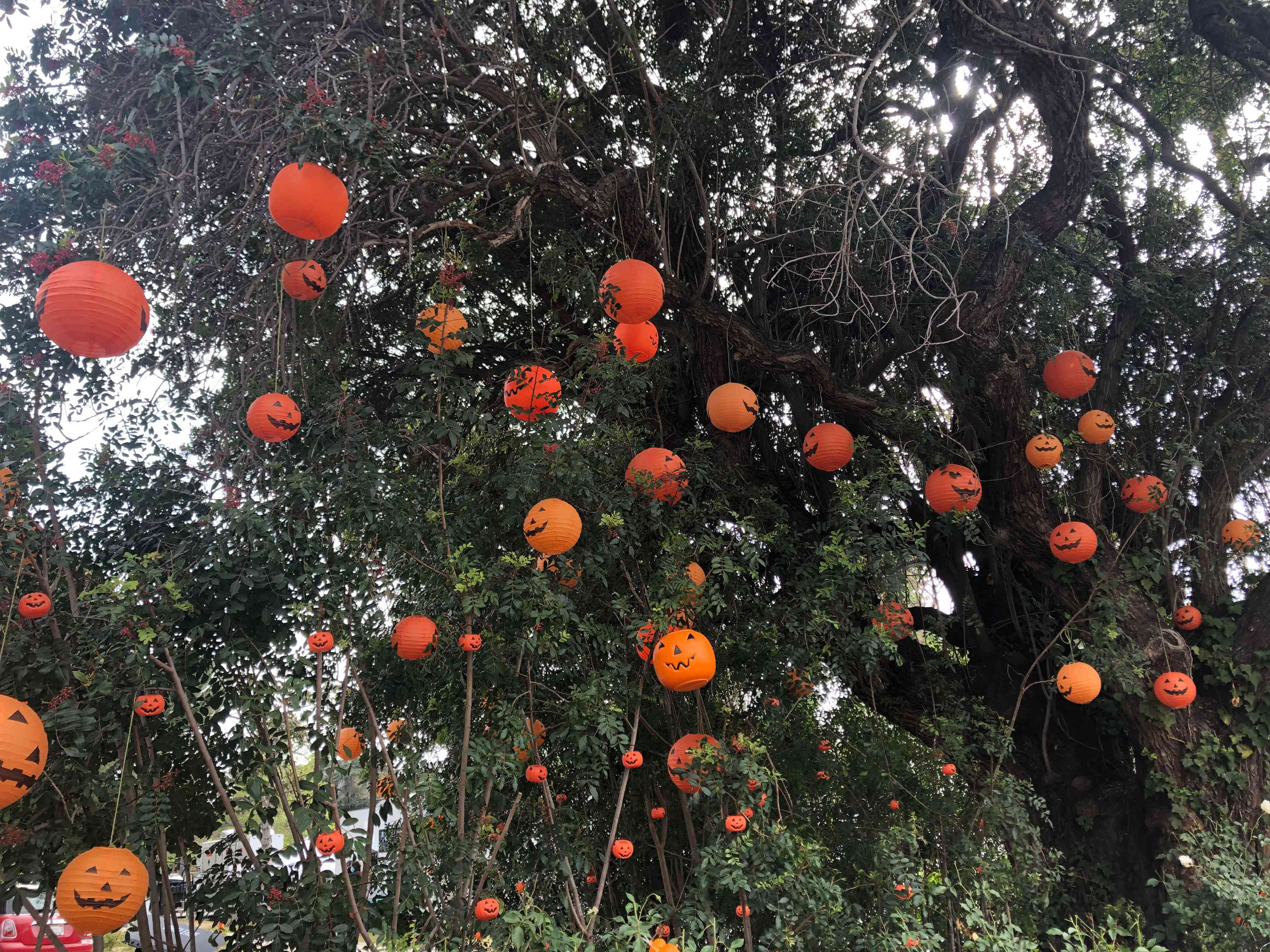Jack-o'-lanterns in trees from a set for