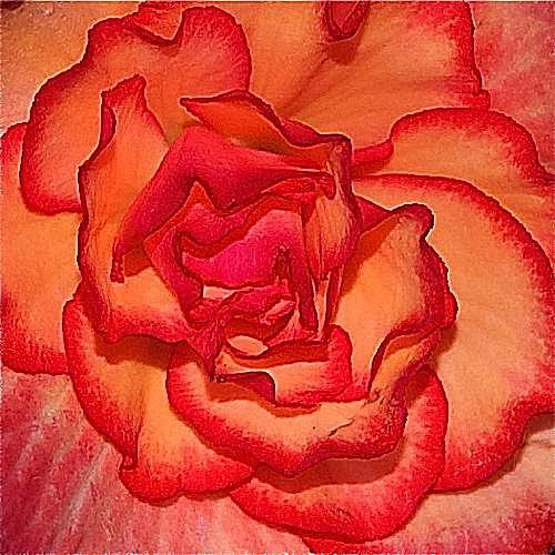 imagen de jardinería en contenedor de begonia, On Top Sunset