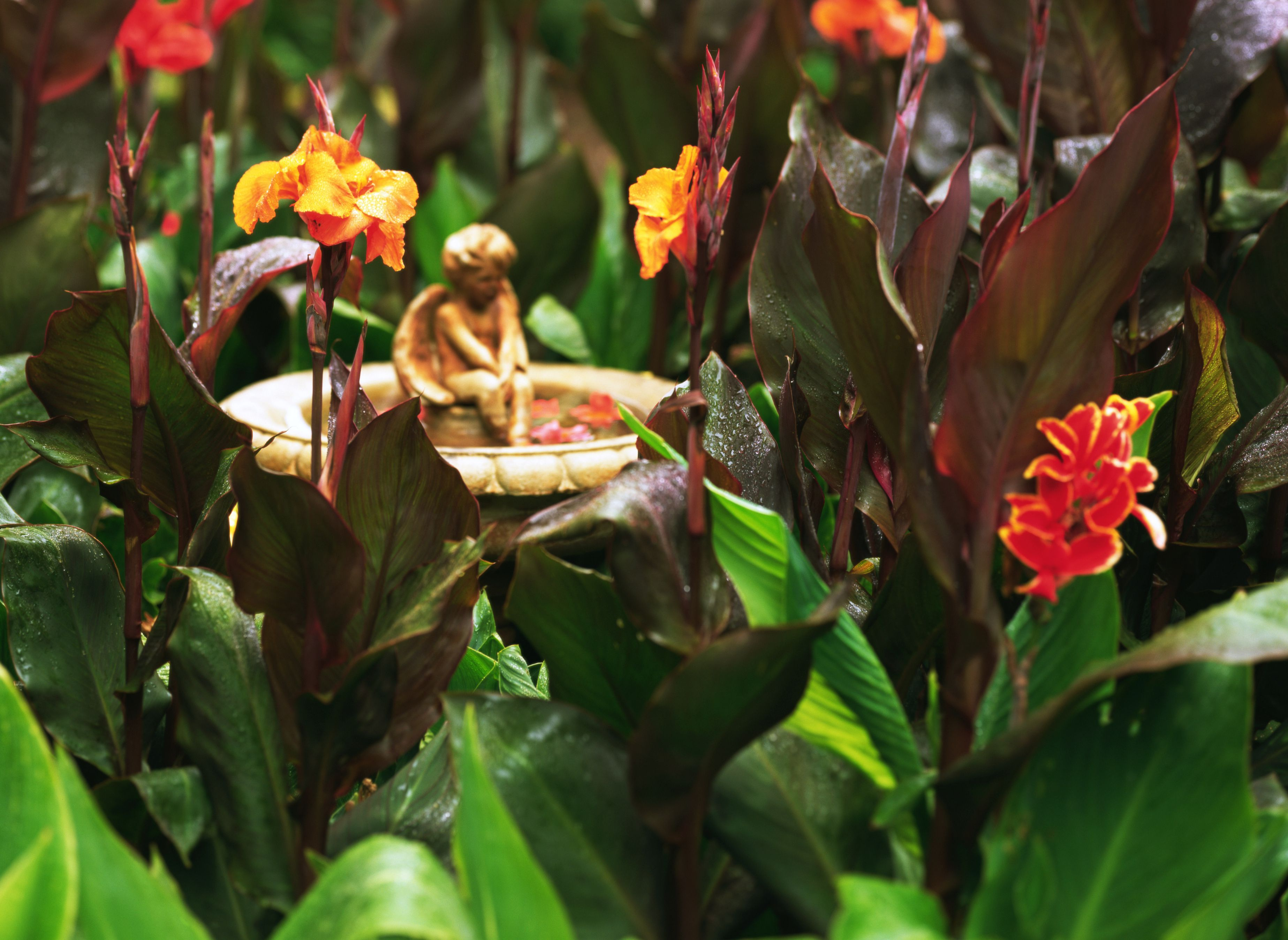14 Tropical Flowers You Can Grow (Almost) Anywhere