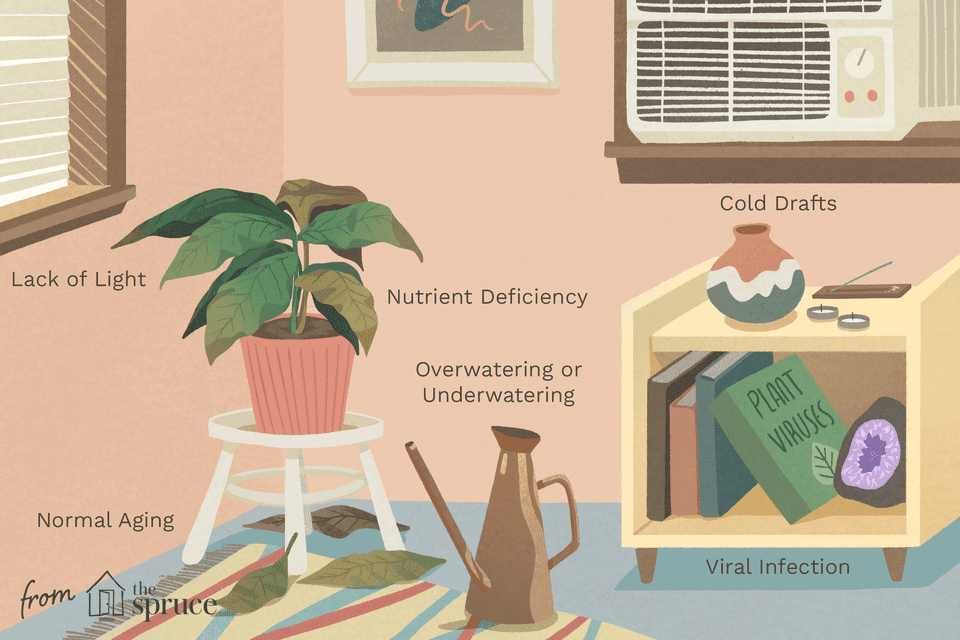 illustration showing causes of yellowing houseplants