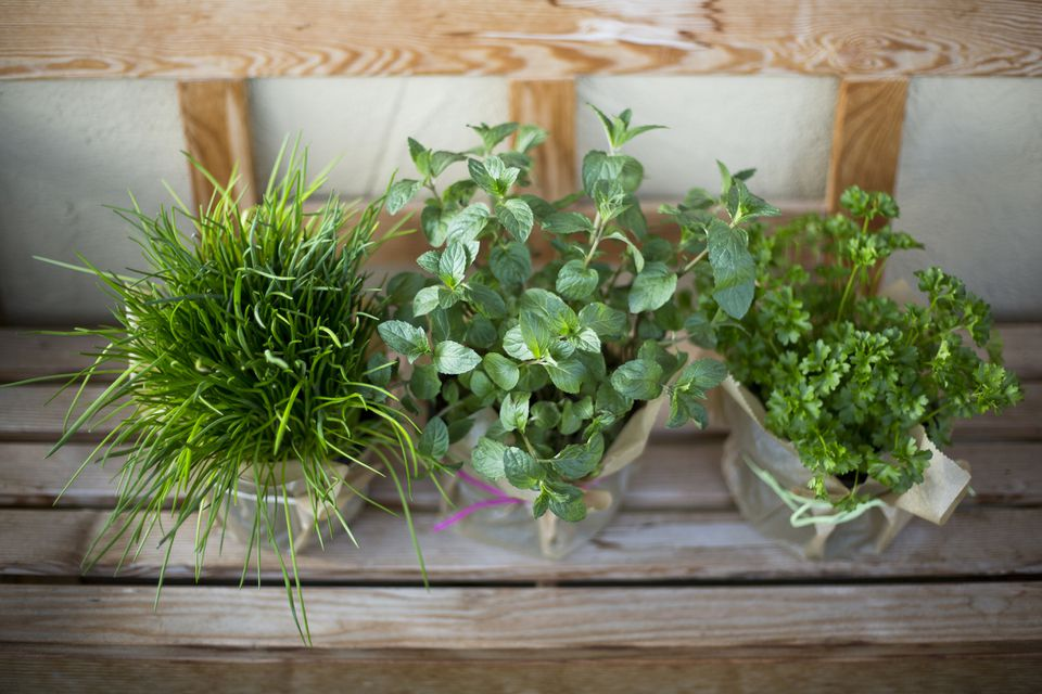 High angle view of culinary herbs in containers